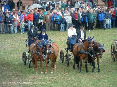 Pferde-, Fohlen- und Zuchtviehmarkt Oberzent