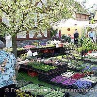 Herbst-Pflanzenmarkt Neu-Anspach