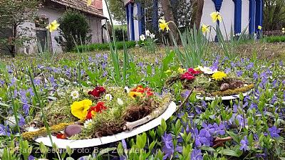 Frühlingserrwachen im Kurpark am Löwensprudel Bad Zwesten