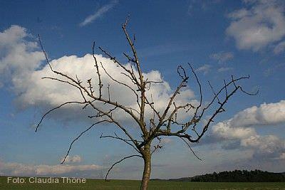 Obstbaumschnitt - Erziehung & Erhaltung Naumburg